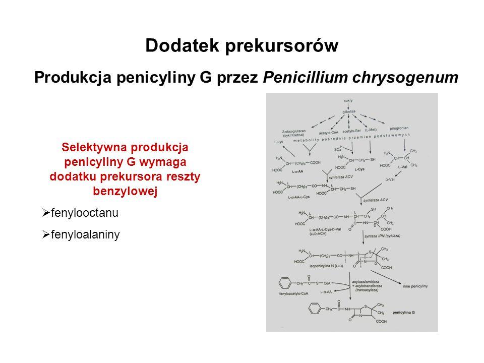 Dodatek prekursorów Produkcja penicyliny G przez Penicillium chrysogenum Selektywna produkcja penicyliny G wymaga dodatku prekursora reszty benzylowej