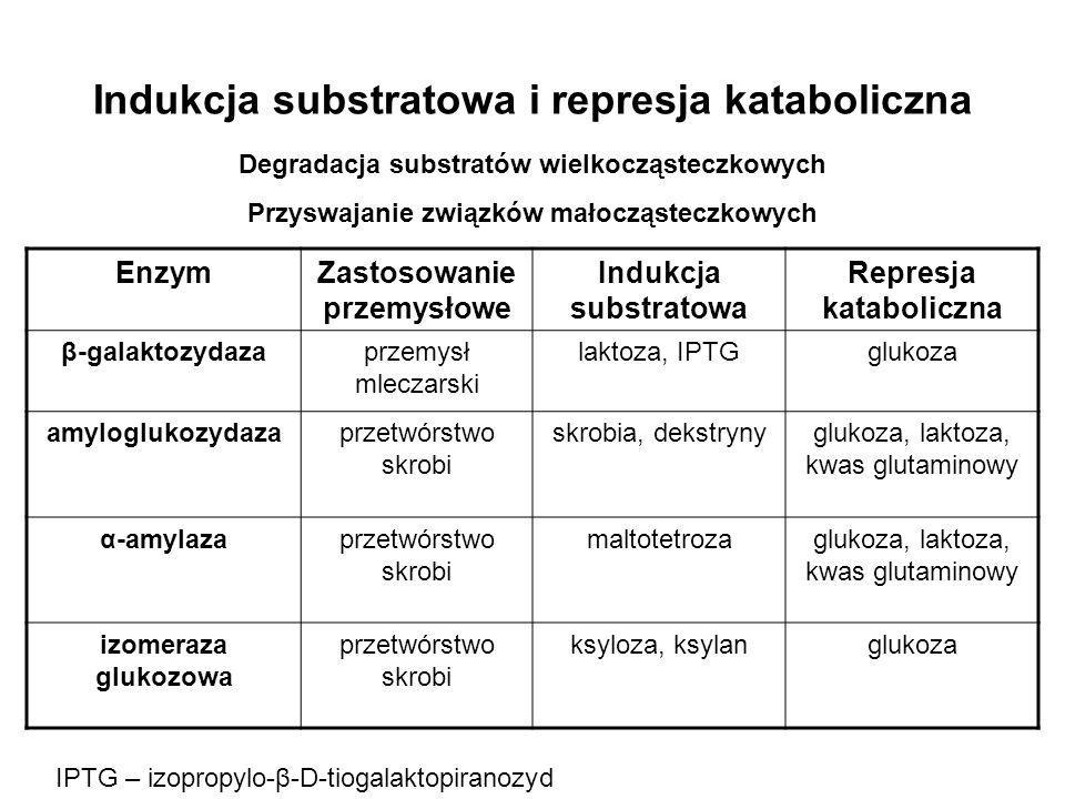Indukcja substratowa i represja kataboliczna EnzymZastosowanie przemysłowe Indukcja substratowa Represja kataboliczna β-galaktozydazaprzemysł mleczars
