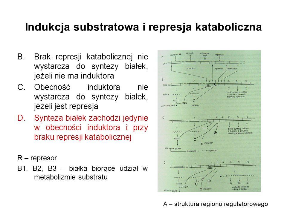 Indukcja substratowa i represja kataboliczna B.Brak represji katabolicznej nie wystarcza do syntezy białek, jeżeli nie ma induktora C.Obecność indukto