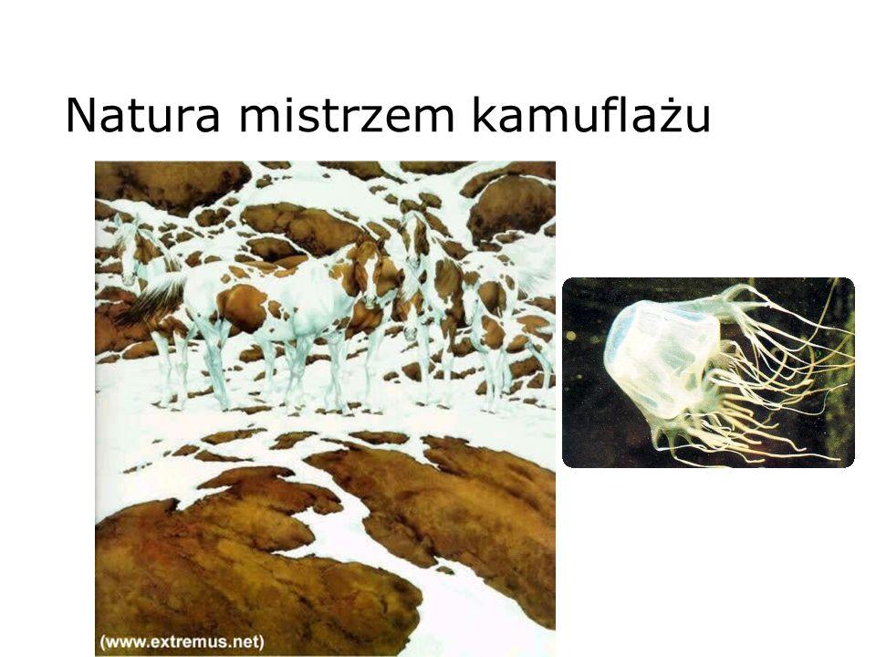 Natura mistrzem kamuflażu