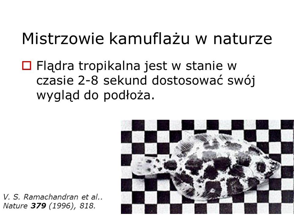 Mistrzowie kamuflażu w naturze Flądra tropikalna jest w stanie w czasie 2-8 sekund dostosować swój wygląd do podłoża. V. S. Ramachandran et al.. Natur