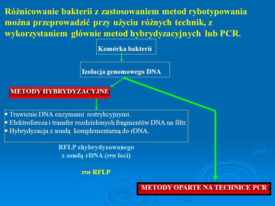 Różnicowanie bakterii z zastosowaniem metod rybotypowania można przeprowadzić przy użyciu różnych technik, z wykorzystaniem głównie metod hybrydyzacyj