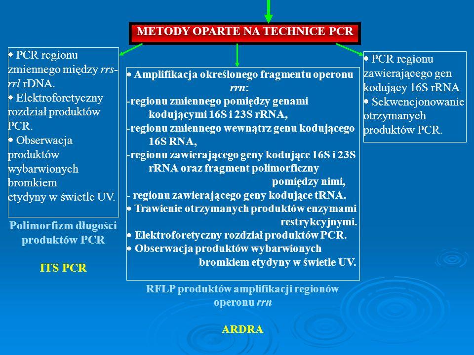 PCR regionu zmiennego między rrs- rrl rDNA. Elektroforetyczny rozdział produktów PCR. Obserwacja produktów wybarwionych bromkiem etydyny w świetle UV.