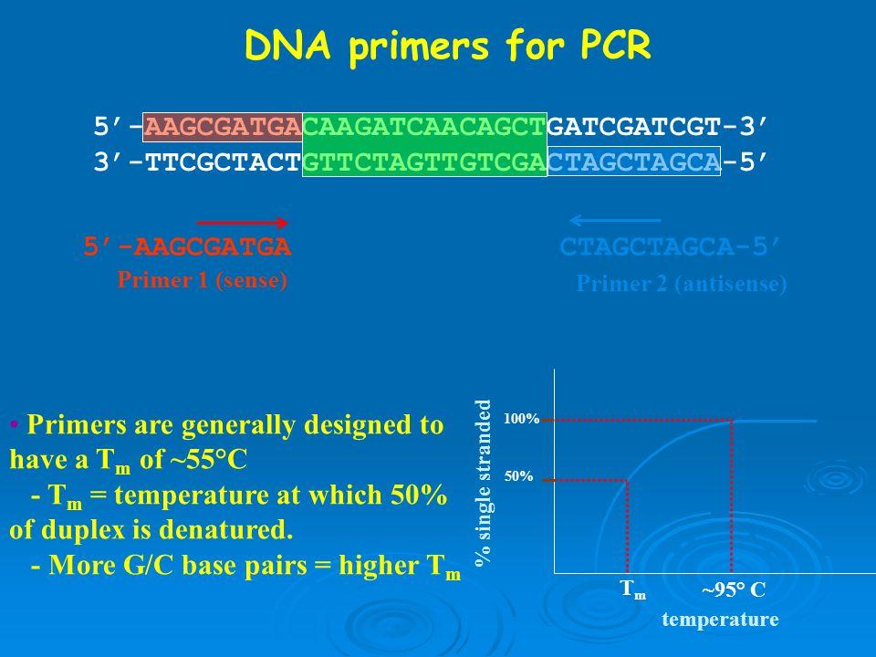 5-AAGCGATGACAAGATCAACAGCTGATCGATCGT-3 3-TTCGCTACTGTTCTAGTTGTCGACTAGCTAGCA-5 5-AAGCGATGA Primer 1 (sense) CTAGCTAGCA-5 Primer 2 (antisense) DNA primers