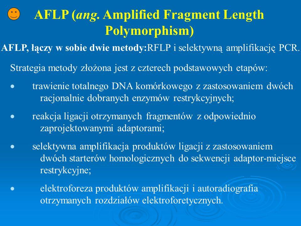 AFLP (ang. Amplified Fragment Length Polymorphism) AFLP, łączy w sobie dwie metody:RFLP i selektywną amplifikację PCR. Strategia metody złożona jest z