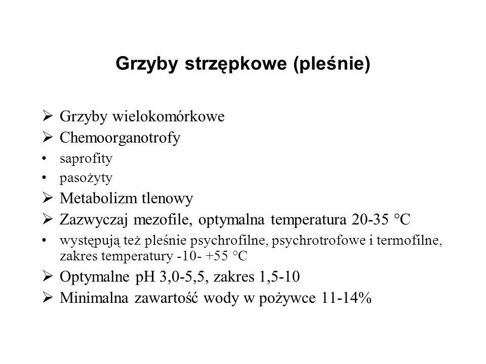 Grzyby strzępkowe (pleśnie) Grzyby wielokomórkowe Chemoorganotrofy saprofity pasożyty Metabolizm tlenowy Zazwyczaj mezofile, optymalna temperatura 20-