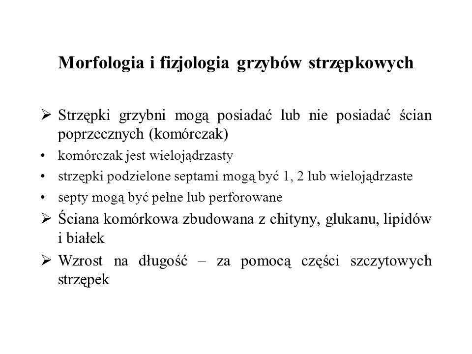 Morfologia i fizjologia grzybów strzępkowych Strzępki grzybni mogą posiadać lub nie posiadać ścian poprzecznych (komórczak) komórczak jest wielojądrza