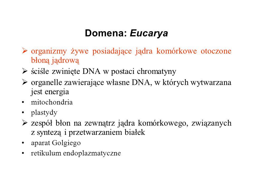 Domena: Eucarya organizmy żywe posiadające jądra komórkowe otoczone błoną jądrową ściśle zwinięte DNA w postaci chromatyny organelle zawierające własn