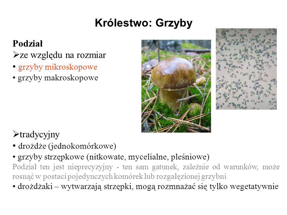 Królestwo: Grzyby Podział ze względu na rozmiar grzyby mikroskopowe grzyby makroskopowe tradycyjny drożdże (jednokomórkowe) grzyby strzępkowe (nitkowa
