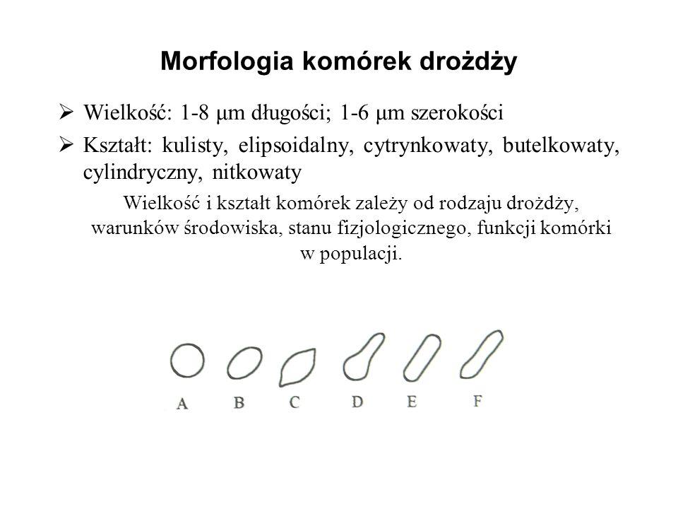 Morfologia komórek drożdży Wielkość: 1-8 μm długości; 1-6 μm szerokości Kształt: kulisty, elipsoidalny, cytrynkowaty, butelkowaty, cylindryczny, nitko