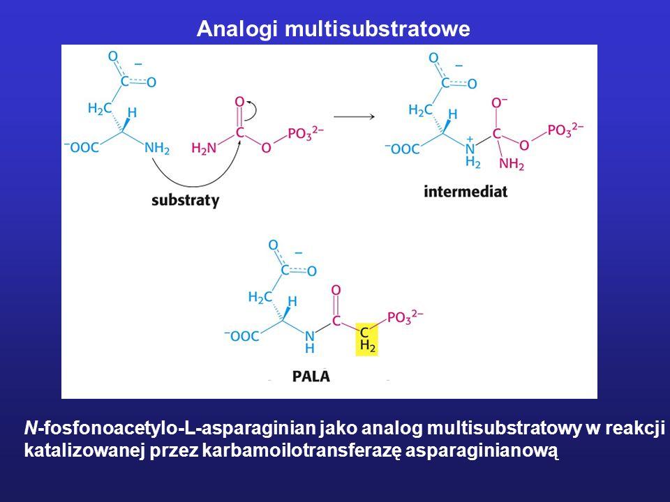 Analogi multisubstratowe N-fosfonoacetylo-L-asparaginian jako analog multisubstratowy w reakcji katalizowanej przez karbamoilotransferazę asparaginian