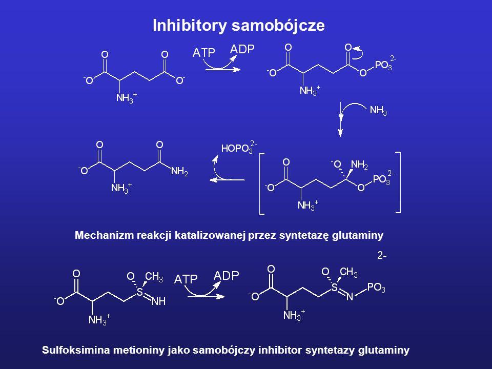 Mechanizm reakcji katalizowanej przez syntetazę glutaminy Sulfoksimina metioniny jako samobójczy inhibitor syntetazy glutaminy Inhibitory samobójcze