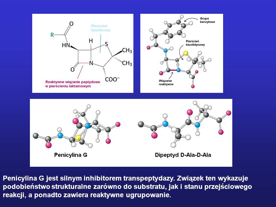 Penicylina G jest silnym inhibitorem transpeptydazy. Związek ten wykazuje podobieństwo strukturalne zarówno do substratu, jak i stanu przejściowego re