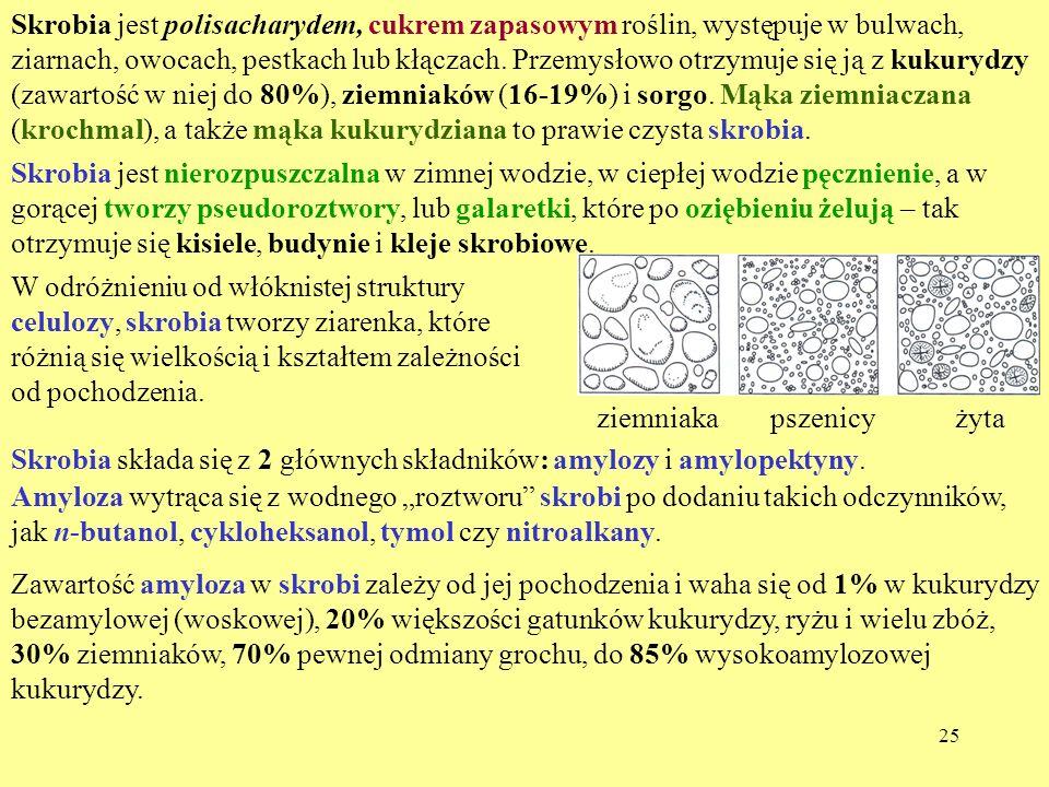 25 Skrobia jest polisacharydem, cukrem zapasowym roślin, występuje w bulwach, ziarnach, owocach, pestkach lub kłączach. Przemysłowo otrzymuje się ją z