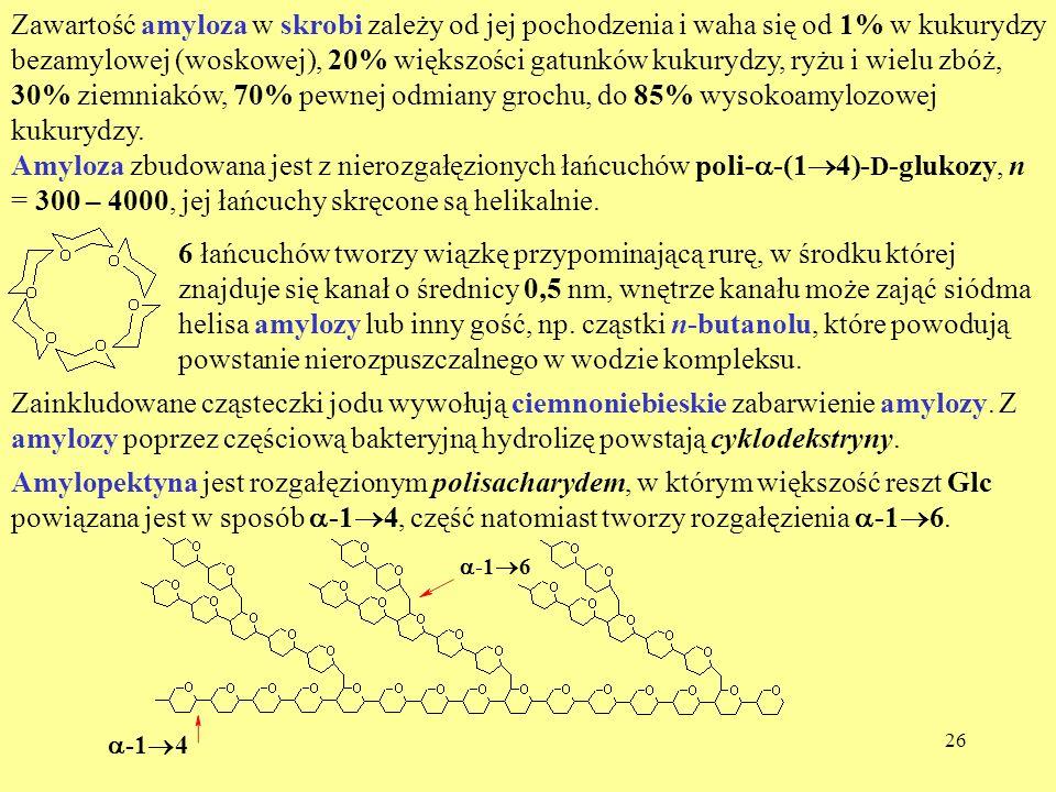 26 Zawartość amyloza w skrobi zależy od jej pochodzenia i waha się od 1% w kukurydzy bezamylowej (woskowej), 20% większości gatunków kukurydzy, ryżu i