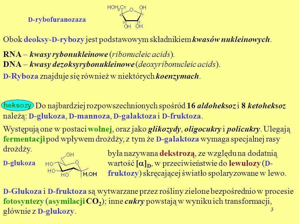 3 D -rybofuranozaza Obok deoksy- D -rybozy jest podstawowym składnikiem kwasów nukleinowych. RNA – kwasy rybonukleinowe (ribonucleic acids). D -Ryboza