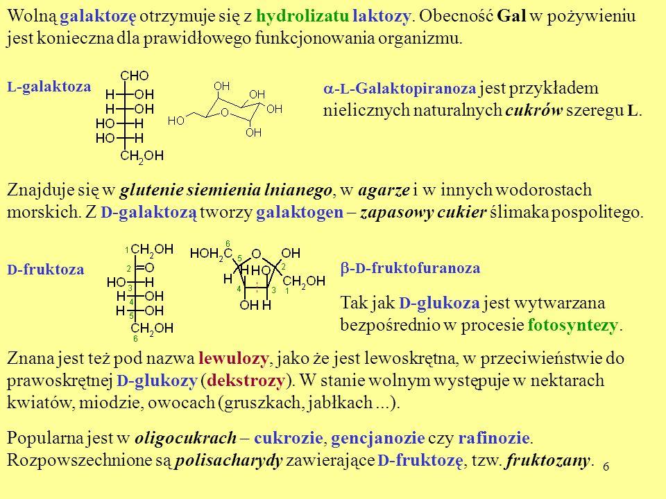 6 Wolną galaktozę otrzymuje się z hydrolizatu laktozy. Obecność Gal w pożywieniu jest konieczna dla prawidłowego funkcjonowania organizmu. L -galaktoz