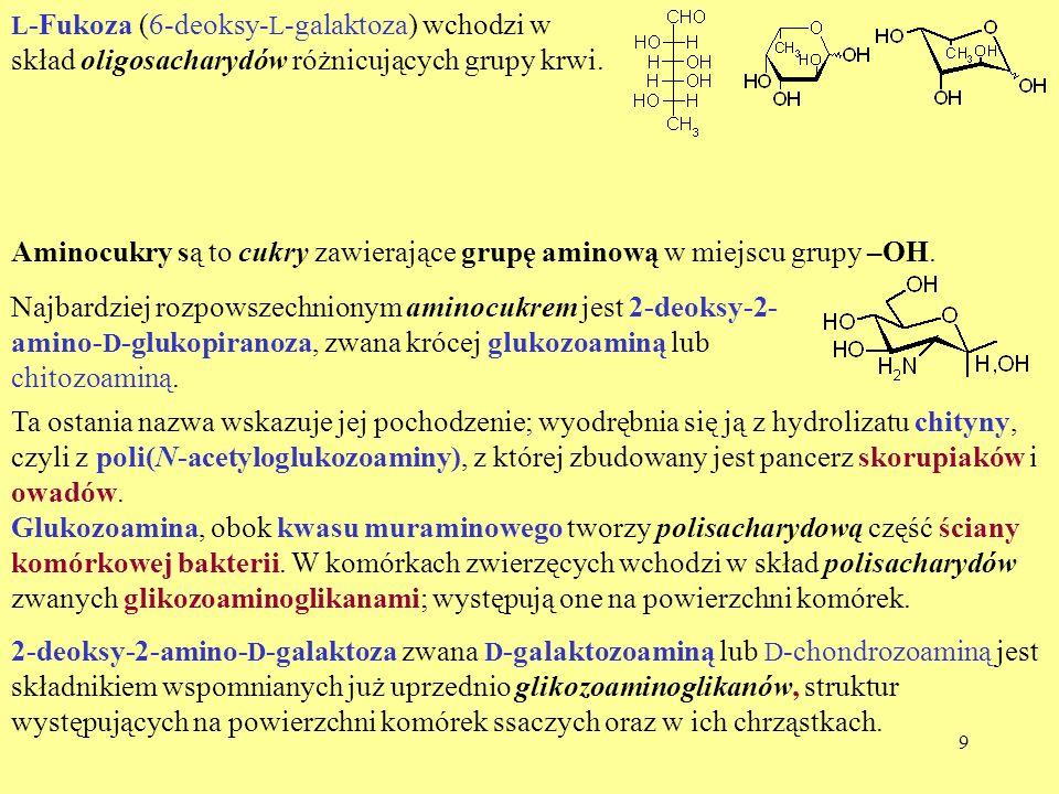 9 L -Fukoza (6-deoksy- L -galaktoza) wchodzi w skład oligosacharydów różnicujących grupy krwi. Aminocukry są to cukry zawierające grupę aminową w miej