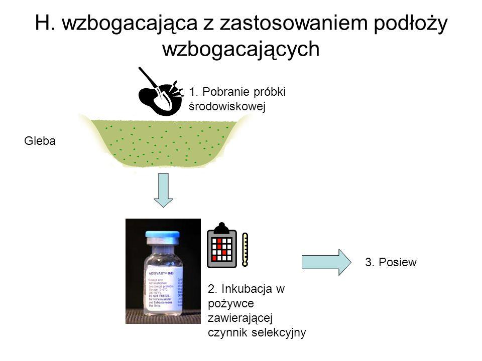 H. wzbogacająca z zastosowaniem podłoży wzbogacających Gleba 1. Pobranie próbki środowiskowej 2. Inkubacja w pożywce zawierającej czynnik selekcyjny 3