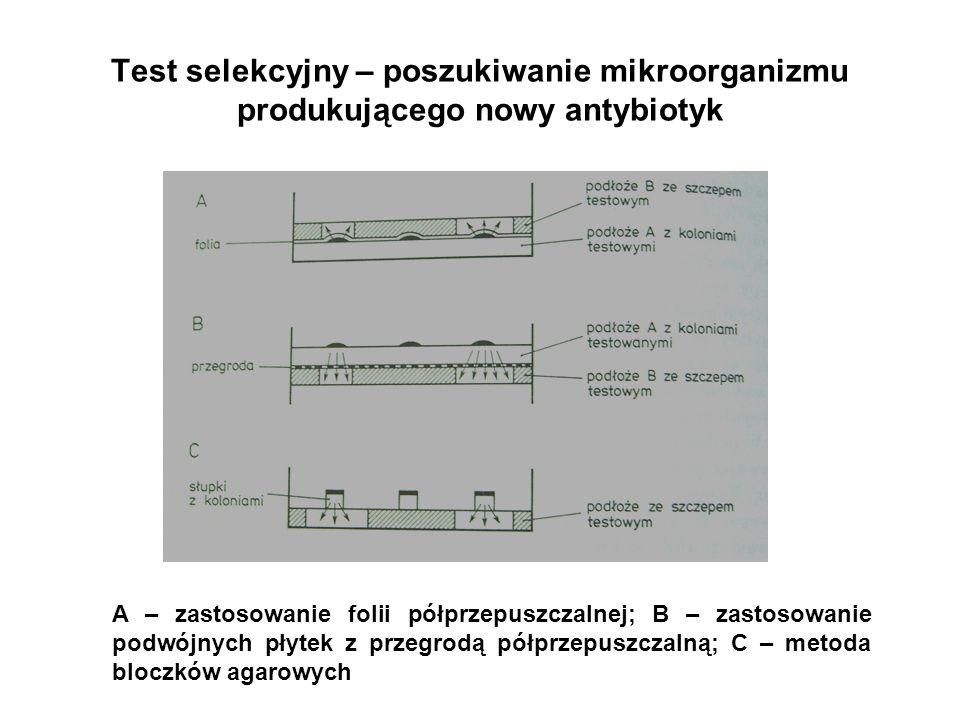 Test selekcyjny – poszukiwanie mikroorganizmu produkującego nowy antybiotyk A – zastosowanie folii półprzepuszczalnej; B – zastosowanie podwójnych pły