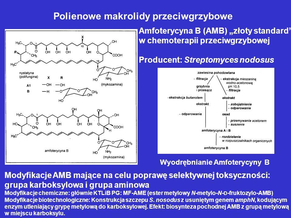 Polienowe makrolidy przeciwgrzybowe Amfoterycyna B (AMB) złoty standard w chemoterapii przeciwgrzybowej Producent: Streptomyces nodosus Wyodrębnianie
