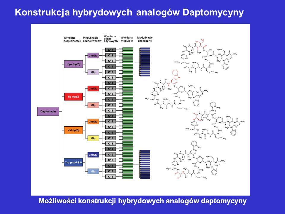 Konstrukcja hybrydowych analogów Daptomycyny Możliwości konstrukcji hybrydowych analogów daptomycyny