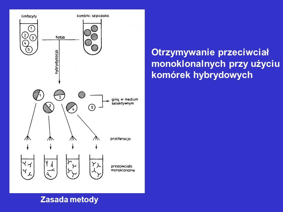 Otrzymywanie przeciwciał monoklonalnych przy użyciu komórek hybrydowych Zasada metody