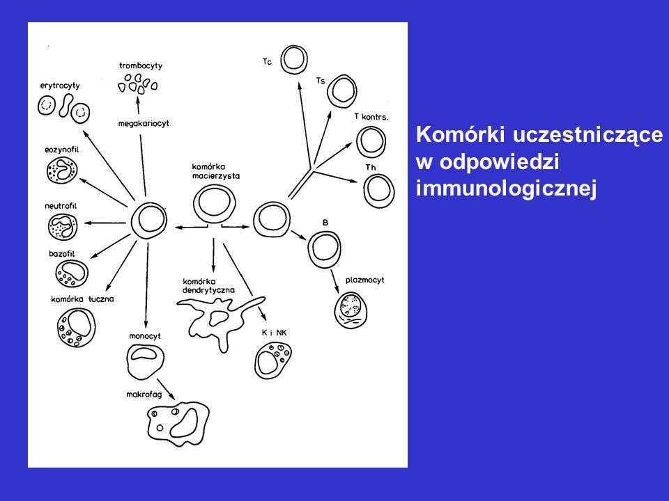 Mechanizm odpowiedzi immunologicznej typu humoralnego