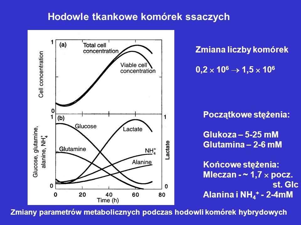 Zmiany parametrów metabolicznych podczas hodowli komórek hybrydowych Zmiana liczby komórek 0,2 10 6 1,5 10 6 Początkowe stężenia: Glukoza – 5-25 mM Gl