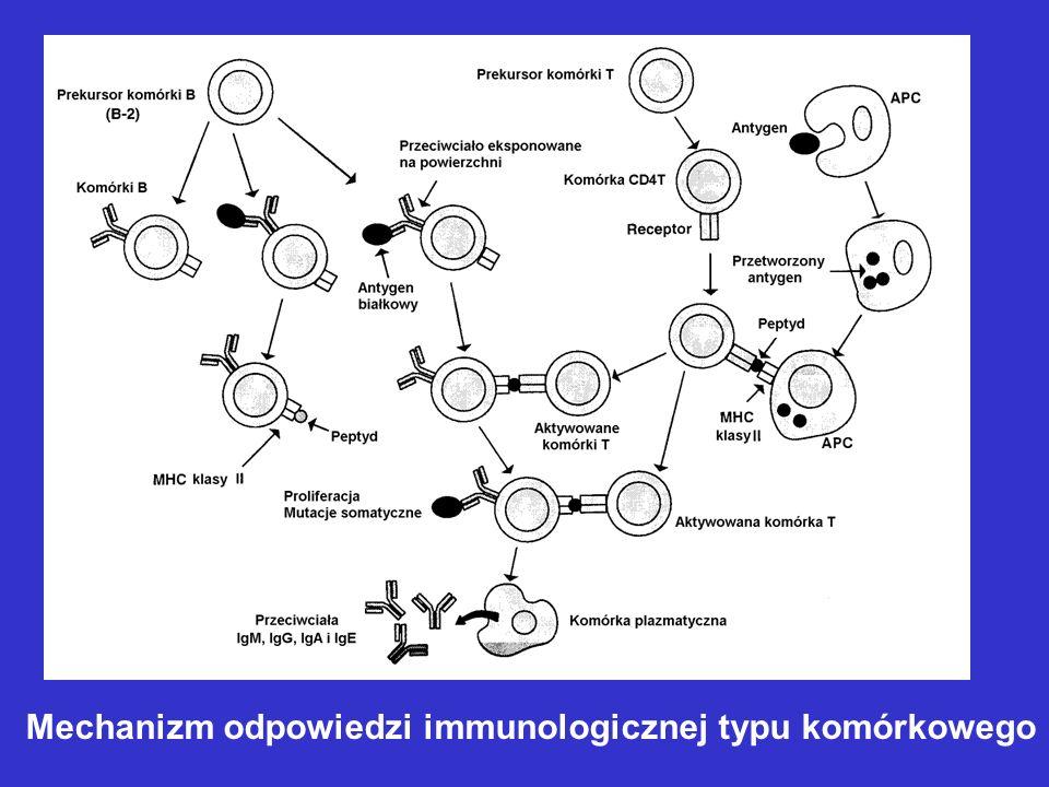 Mechanizm odpowiedzi immunologicznej typu komórkowego