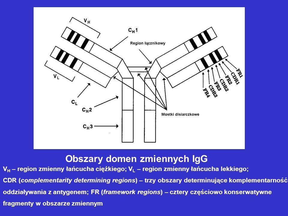 Obszary domen zmiennych IgG V H – region zmienny łańcucha ciężkiego; V L – region zmienny łańcucha lekkiego; CDR (complementarity determining regions)