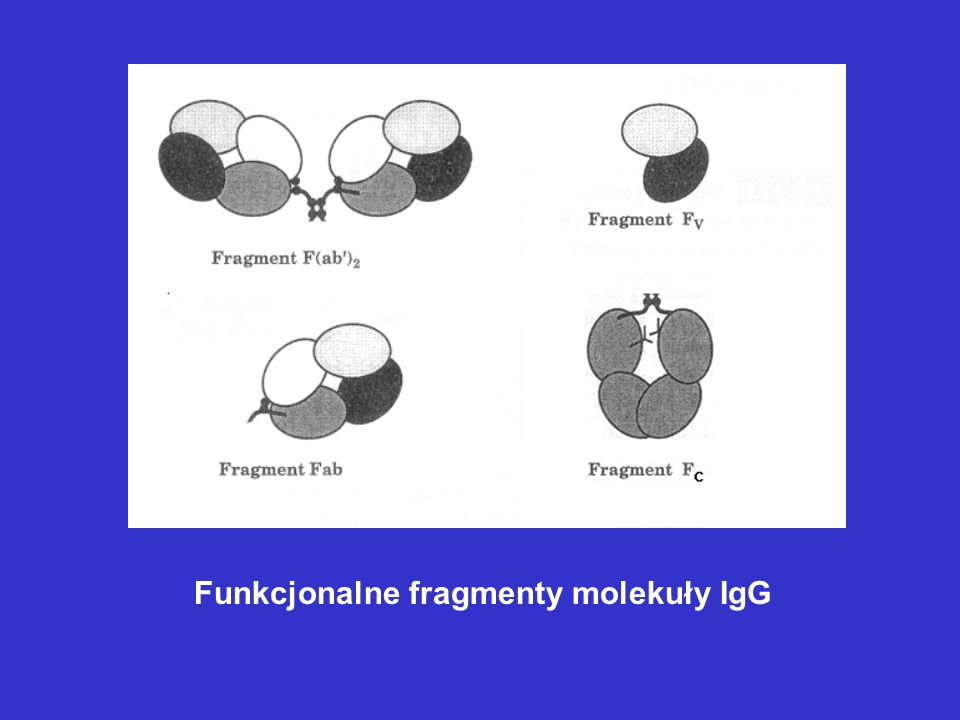 Przykłady biofarmaceutyków zawierających przeciwciała lub ich fragmenty 1.Muromonab-CD3 Mysie przeciwciało monoklonalne wobec antygenu CD3 ludzkich komórek T.