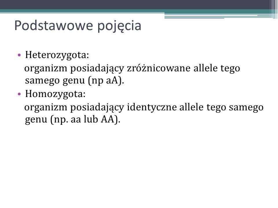 Podstawowe pojęcia Heterozygota: organizm posiadający zróżnicowane allele tego samego genu (np aA). Homozygota: organizm posiadający identyczne allele