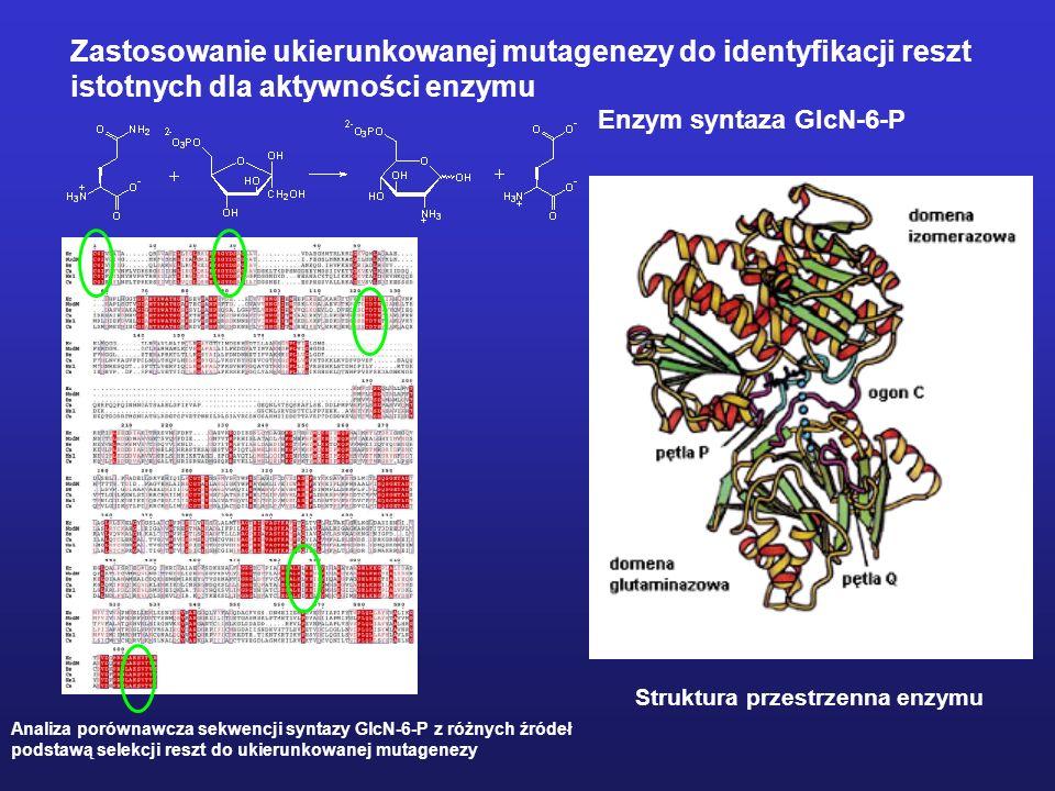 Mutageneza ukierunkowana Mutageneza to proces prowadzący do powstania mutacji, czyli dziedziczonej zmiany sekwencji nukleotydowej DNA Mutageneza ukier