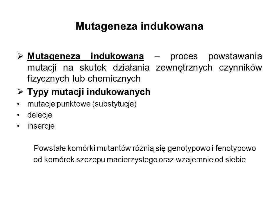 Mutageneza indukowana Mutageneza indukowana – proces powstawania mutacji na skutek działania zewnętrznych czynników fizycznych lub chemicznych Typy mu