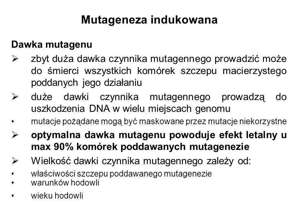 Dawka mutagenu zbyt duża dawka czynnika mutagennego prowadzić może do śmierci wszystkich komórek szczepu macierzystego poddanych jego działaniu duże d
