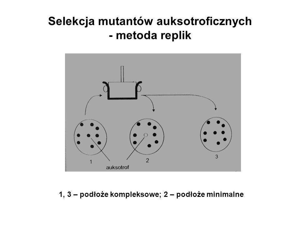 Selekcja mutantów auksotroficznych - metoda replik 1, 3 – podłoże kompleksowe; 2 – podłoże minimalne