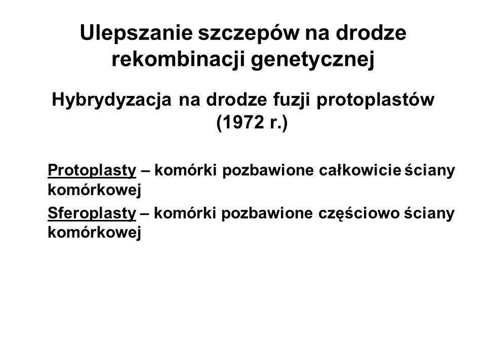 Ulepszanie szczepów na drodze rekombinacji genetycznej Hybrydyzacja na drodze fuzji protoplastów (1972 r.) Protoplasty – komórki pozbawione całkowicie
