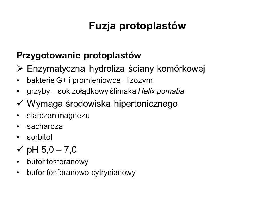 Fuzja protoplastów Przygotowanie protoplastów Enzymatyczna hydroliza ściany komórkowej bakterie G+ i promieniowce - lizozym grzyby – sok żołądkowy śli