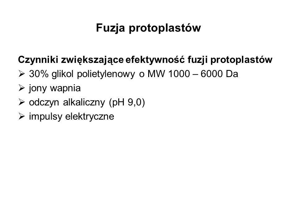 Fuzja protoplastów Czynniki zwiększające efektywność fuzji protoplastów 30% glikol polietylenowy o MW 1000 – 6000 Da jony wapnia odczyn alkaliczny (pH