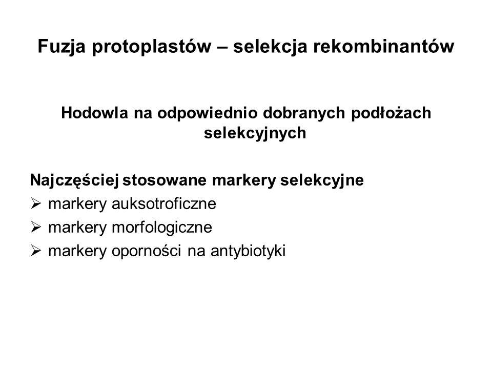Fuzja protoplastów – selekcja rekombinantów Hodowla na odpowiednio dobranych podłożach selekcyjnych Najczęściej stosowane markery selekcyjne markery a