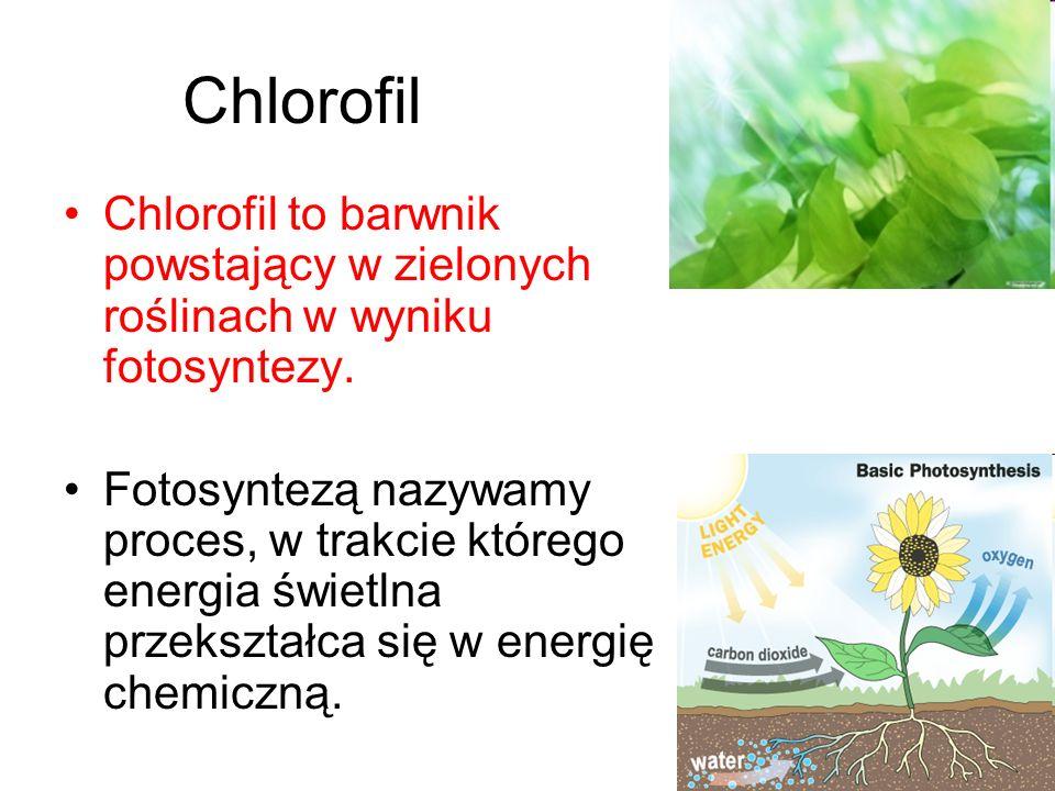 Chlorofil Chlorofil to barwnik powstający w zielonych roślinach w wyniku fotosyntezy. Fotosyntezą nazywamy proces, w trakcie którego energia świetlna