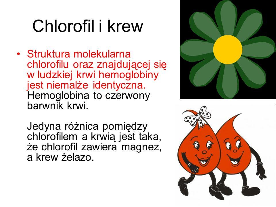 Chlorofil i krew Struktura molekularna chlorofilu oraz znajdującej się w ludzkiej krwi hemoglobiny jest niemalże identyczna. Hemoglobina to czerwony b