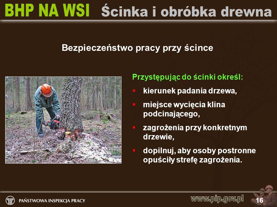16 Bezpieczeństwo pracy przy ścince Przystępując do ścinki określ: kierunek padania drzewa, miejsce wycięcia klina podcinającego, zagrożenia przy konk