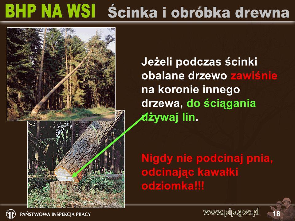 18 Jeżeli podczas ścinki obalane drzewo zawiśnie na koronie innego drzewa, do ściągania używaj lin. Nigdy nie podcinaj pnia, odcinając kawałki odziomk