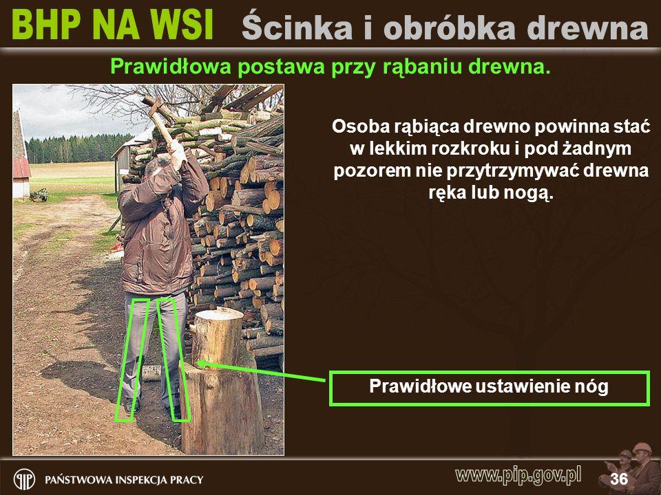36 Prawidłowa postawa przy rąbaniu drewna. Osoba rąbiąca drewno powinna stać w lekkim rozkroku i pod żadnym pozorem nie przytrzymywać drewna ręka lub