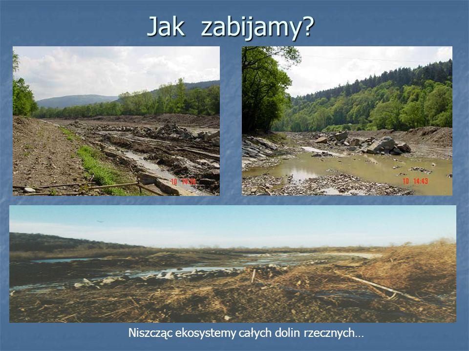 Jak zabijamy? Niszcząc ekosystemy całych dolin rzecznych…