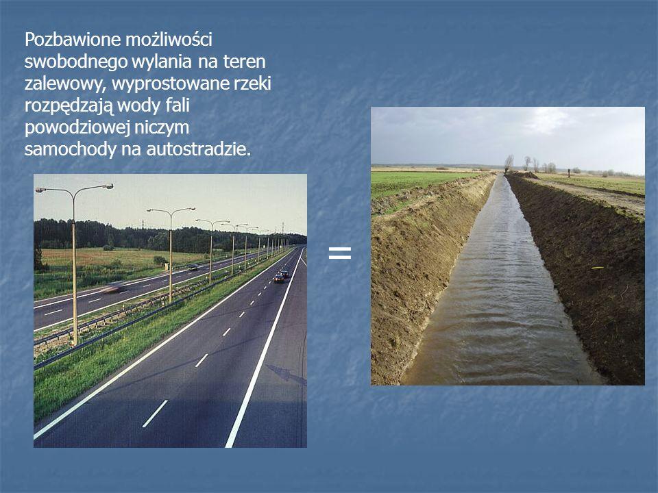 Pozbawione możliwości swobodnego wylania na teren zalewowy, wyprostowane rzeki rozpędzają wody fali powodziowej niczym samochody na autostradzie. =