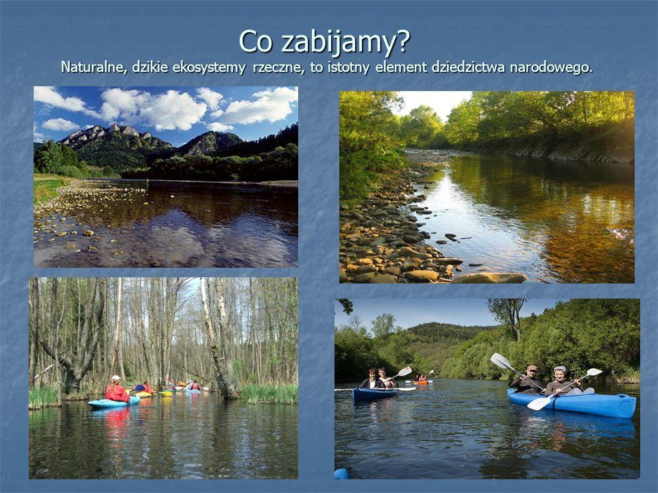 Co zabijamy? Naturalne, dzikie ekosystemy rzeczne, to istotny element dziedzictwa narodowego.
