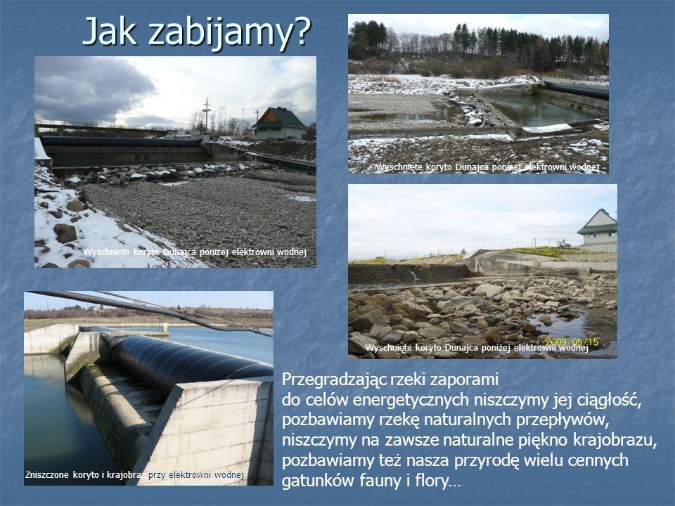 Jak zabijamy? Przegradzając rzeki zaporami do celów energetycznych niszczymy jej ciągłość, pozbawiamy rzekę naturalnych przepływów, niszczymy na zawsz